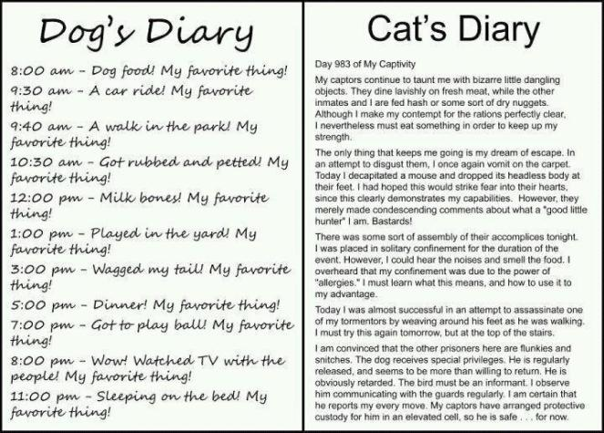 dog diary vs cat diary