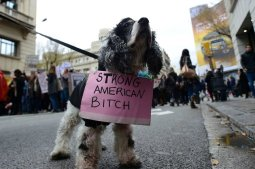 A dog sports a sign during a march in central Barcelona on January 21, 2017 in a mark of solidarity for the political rally promoting the rights and equality for women, Women's March on Washington, taking place today in the US capital. / AFP / LLUIS GENE (Photo credit should read LLUIS GENE/AFP/Getty Images)